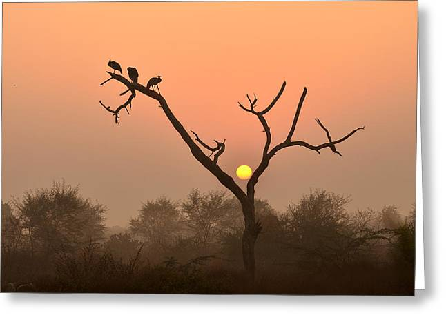 Sunrise At Bharatpur Greeting Card