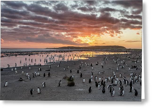 Sunrise At Sea Lion Greeting Card