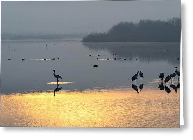 Sunrise Over The Hula Valley Israel 1 Greeting Card