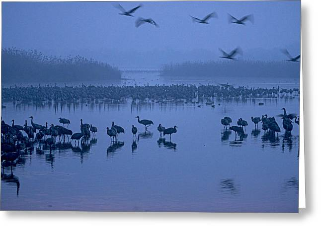 Sunrise Over The Hula Valley Israel 4 Greeting Card