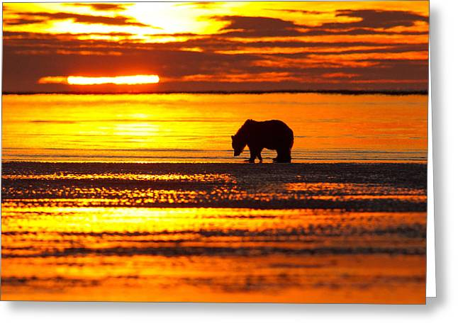 Sunrise Bear Greeting Card