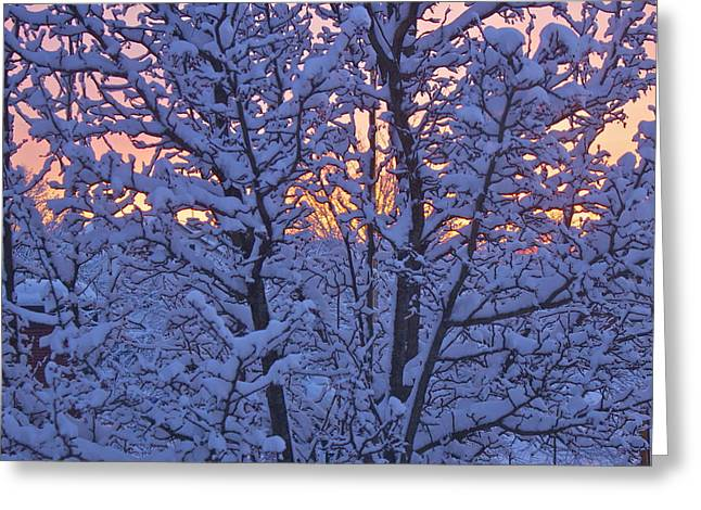 Sunrise Branches Greeting Card by Alice Mainville