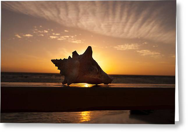 Sunrise Conch Greeting Card