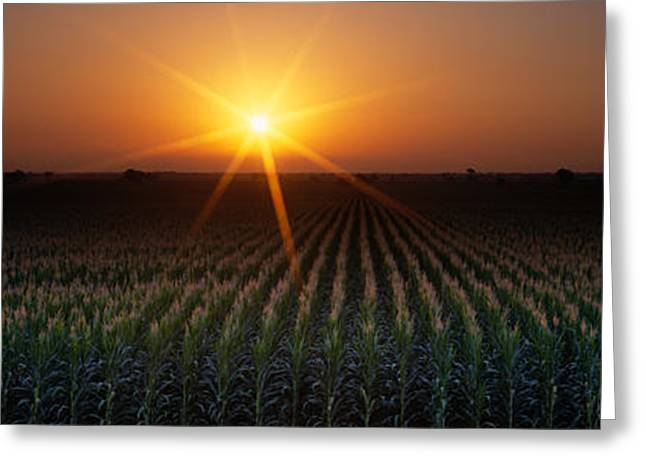 Sunrise, Crops, Farm, Sacramento Greeting Card by Panoramic Images