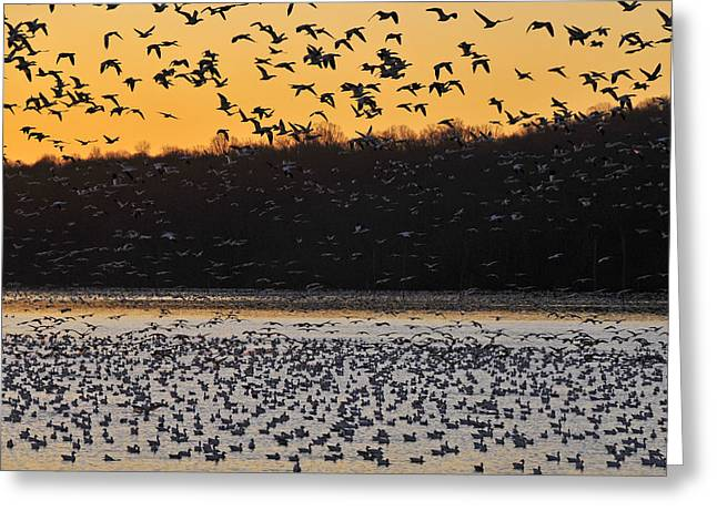 Sunrise Departure Greeting Card by Dan Myers