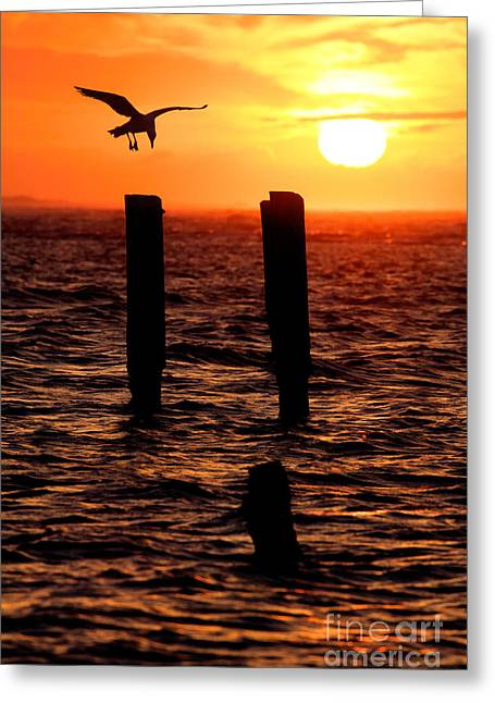 Sunrise Descent - Outer Banks Ocracoke Greeting Card by Dan Carmichael