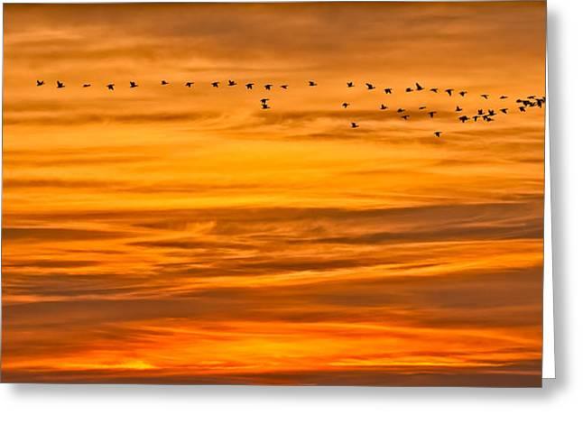 Sunrise Flight Greeting Card
