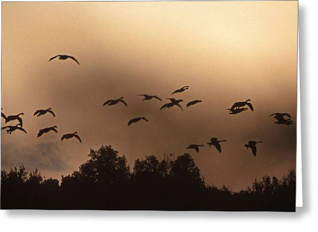 Sunrise Fog And Incoming Greeting Card by Skip Willits