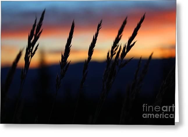 Sunrise From Mt. Elbert Greeting Card