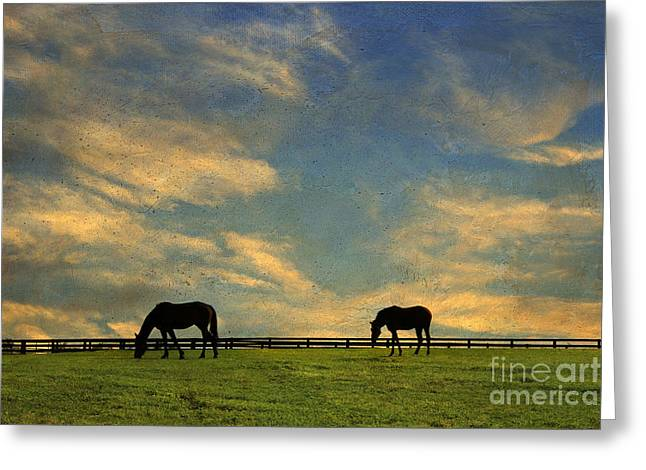 Sunrise Graze Greeting Card by Darren Fisher