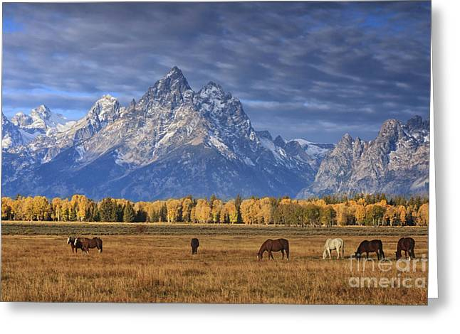 Sunrise Grazing Greeting Card by Mark Kiver