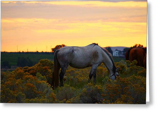 Greeting Card featuring the photograph Sunrise Horse by Lynn Hopwood
