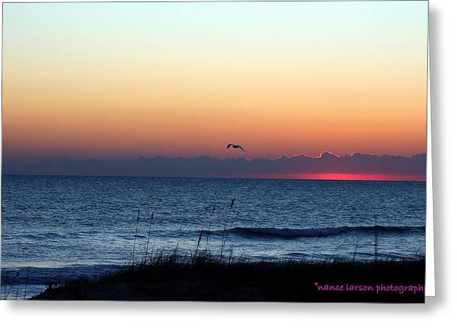 Sunrise In Florida Greeting Card by Nance Larson