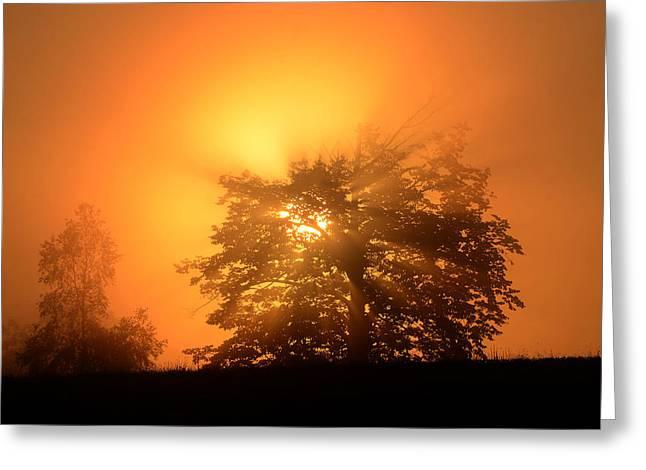 Sunrise In Fog Greeting Card