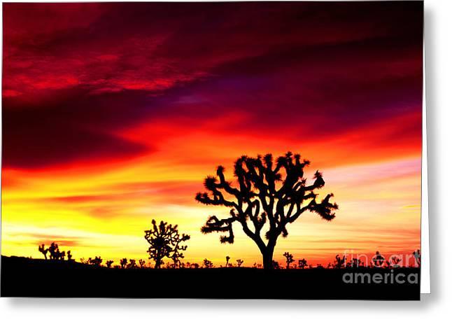 Sunrise In Joshua Tree Nat'l Park Greeting Card