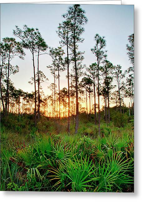 Sunrise In Long Pine Area Of Everglades Greeting Card
