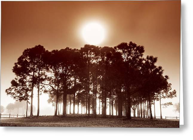 Sunrise In The Fog Greeting Card by Debra and Dave Vanderlaan