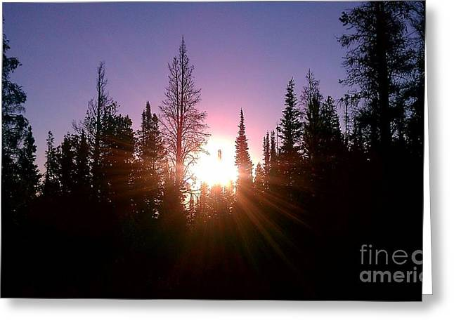 Sunrise In The Forest Greeting Card