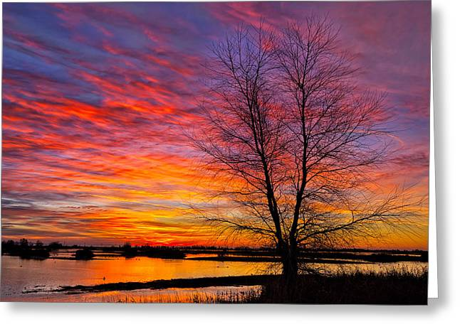Sunrise In The Sacramento Valley Greeting Card