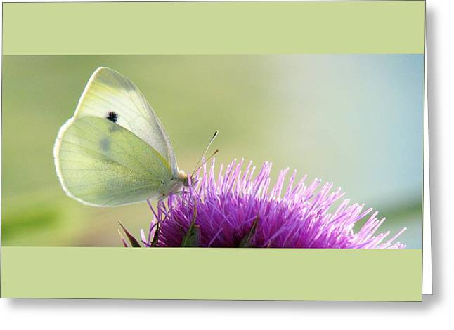 Sunrise In The Thistle Fields Greeting Card