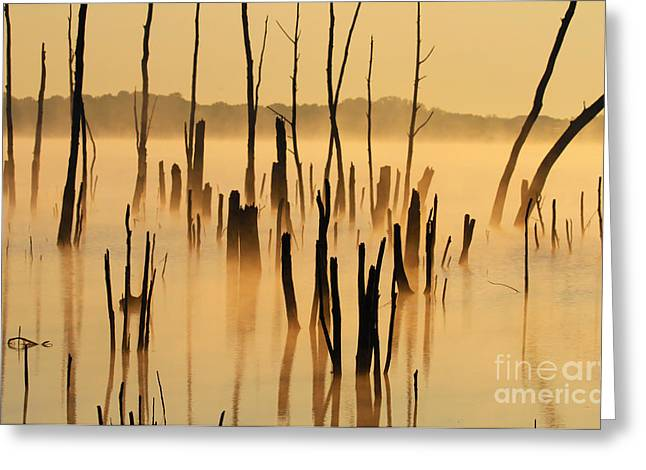 Sunrise Mist Greeting Card by Roger Becker