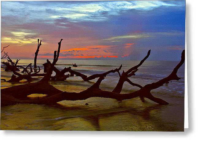 Sunrise On Bulls Island Greeting Card by Bill Barber