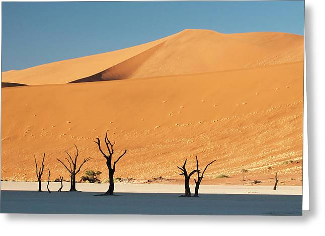 Sunrise On Dead Trees And Dunes At Dead Greeting Card by Jaynes Gallery