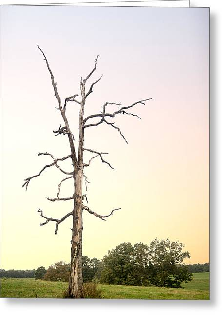 Sunrise On Ghost Tree Greeting Card