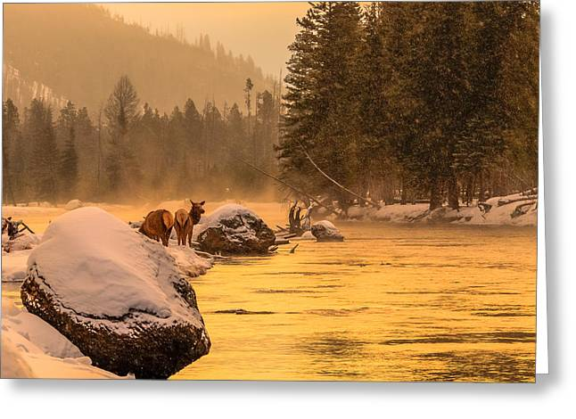 Greeting Card featuring the photograph Sunrise On Madison River by Yeates Photography
