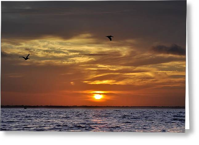 Sunrise On Tampa Bay Greeting Card by Bill Cannon