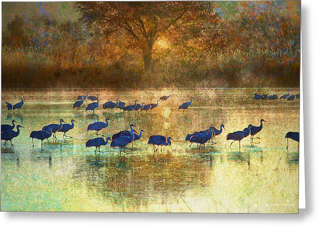 Sunrise On The Bosque Greeting Card