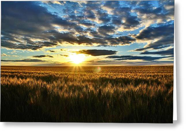 Sunrise On The Wheat Field Greeting Card