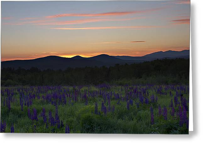 Sunrise Over A Field Of Lupines Greeting Card