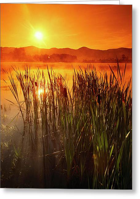 Sunrise Over A Misty Pond Greeting Card by Richard Nowitz