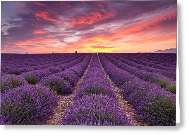 Sunrise Over Lavender Greeting Card