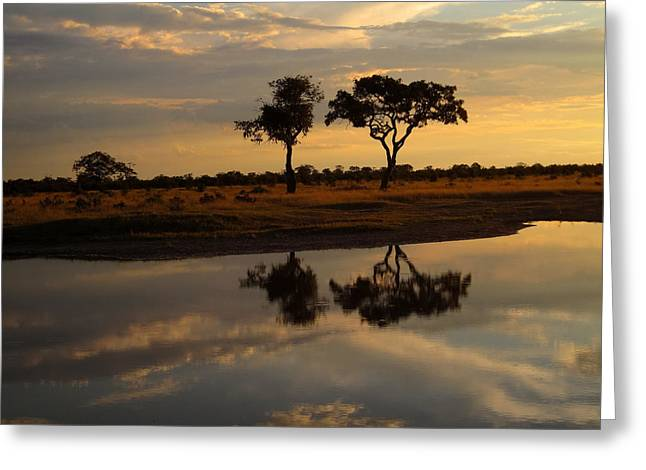 Sunrise Over Savuti Park Greeting Card
