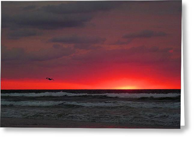 Sunrise Pink Greeting Card by JC Findley