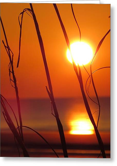 Greeting Card featuring the photograph Sunrise Plant by Nikki McInnes