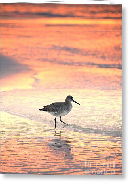 Sunrise Shorebird Greeting Card by Henry Kowalski