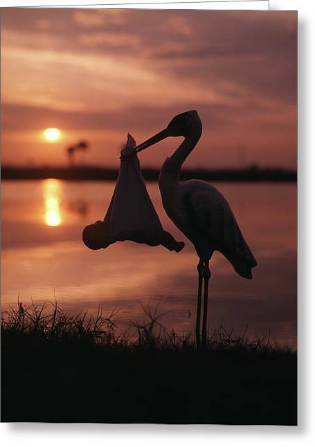 Sunrise Silhouette Of Stork Carrying Greeting Card