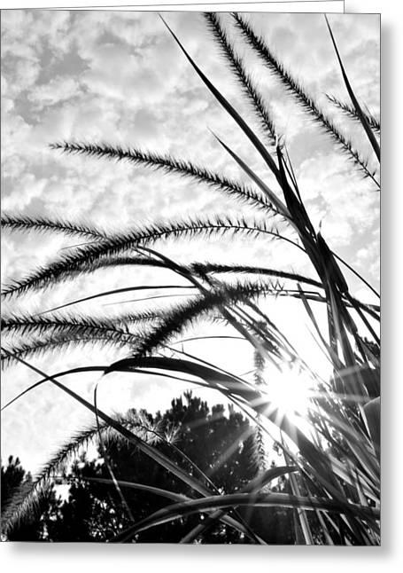 Greeting Card featuring the photograph Sunrise Sunburst by Kelly Nowak