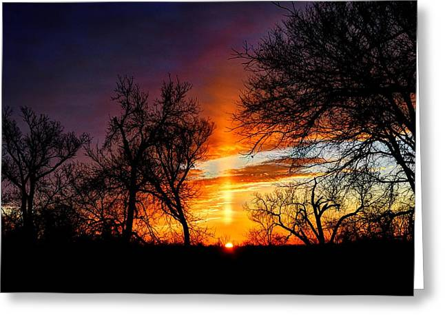Sunrise Through The Cottonwoods Greeting Card by Jean Hutchison