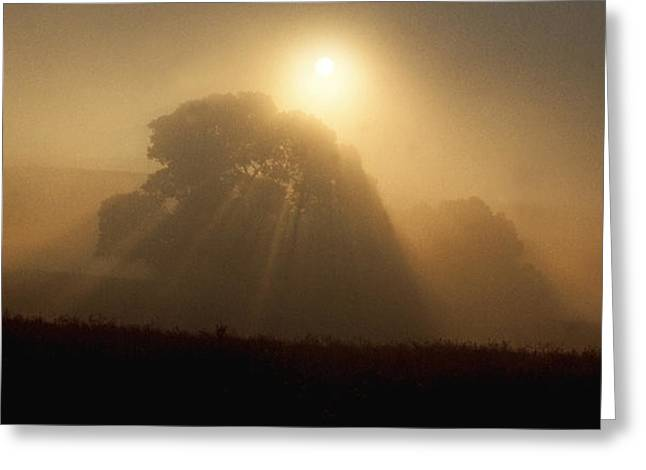 Greeting Card featuring the photograph Sunrise Through The Fog by Judi Baker
