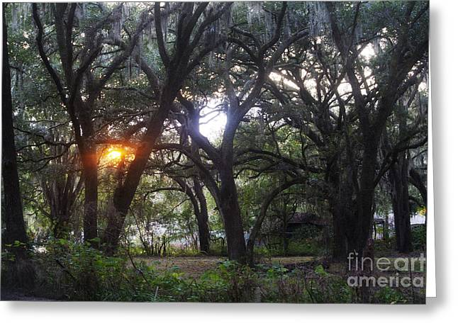 Sunrise Through The Oaks Greeting Card