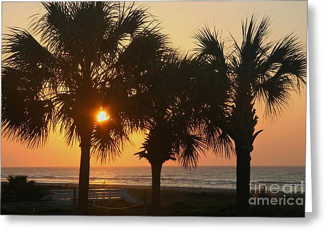 Sunrise Through The Palms Greeting Card by Kevin McCarthy