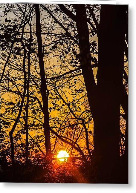 Sunrise Through Trees Greeting Card