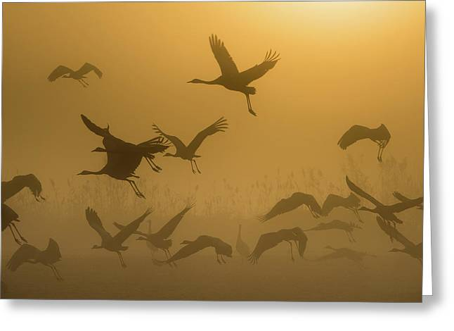 Sunrise With Cranes Greeting Card