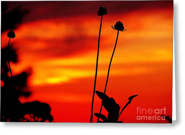 Sunset 365 20 Greeting Card by Tina M Wenger