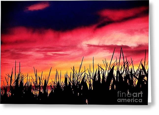 Sunset 365 62 Greeting Card by Tina M Wenger