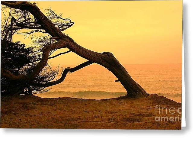 Sunset And Cypress Greeting Card